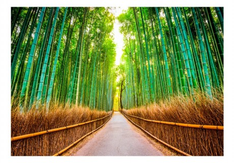 Fotomurale - Bamboo Forest