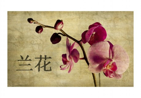 Fotomurale - Japanese orchid