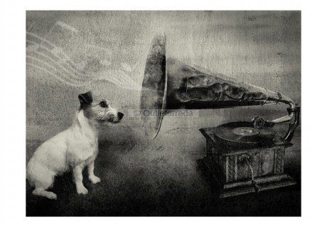 Fotomurale - Dog's melodies