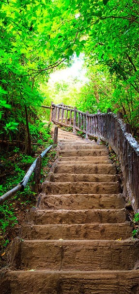 Fotomurale per porta - Photo wallpaper – Stairs from nature I