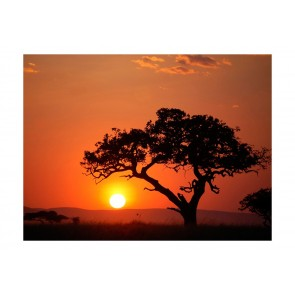 Fotomurale - Africa: tramonto