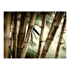 Fotomurale - Fog and bamboo forest