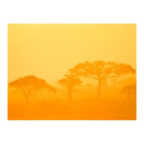 Fotomurale - Orange savanna