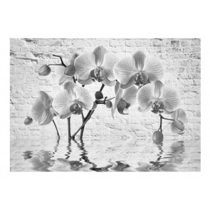 Fotomurale - Orchid in Shades of Gray