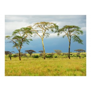 Fotomurale - Savanna trees