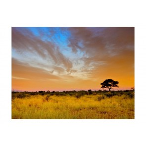 Fotomurale - South African sunset