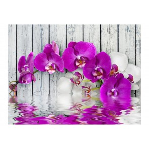 Fotomurale - Violet orchids with water reflexion