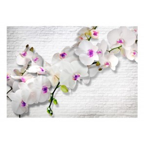 Fotomurale - Wall full of orchids II