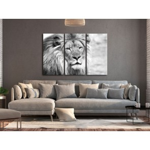 Quadro - The King of Beasts (3 Parts) Black and White